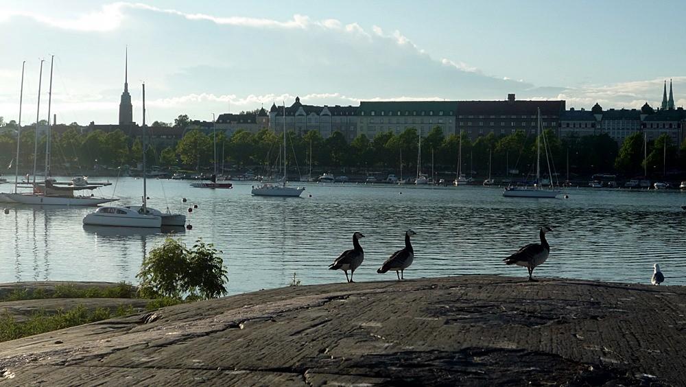 Finland birds