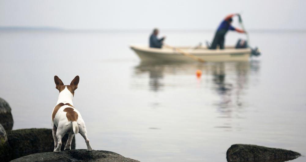 Sea Fishing Finland